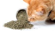 3 Things to Make Your Association Like Cat Nip to Members